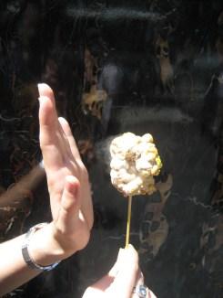 Popcornsicle_close