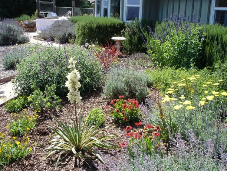 Make Your Backyard More Appealing with Drought Tolerant Landscaping Design 7