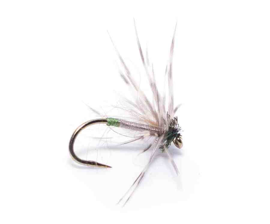 North Country Spider Greentail