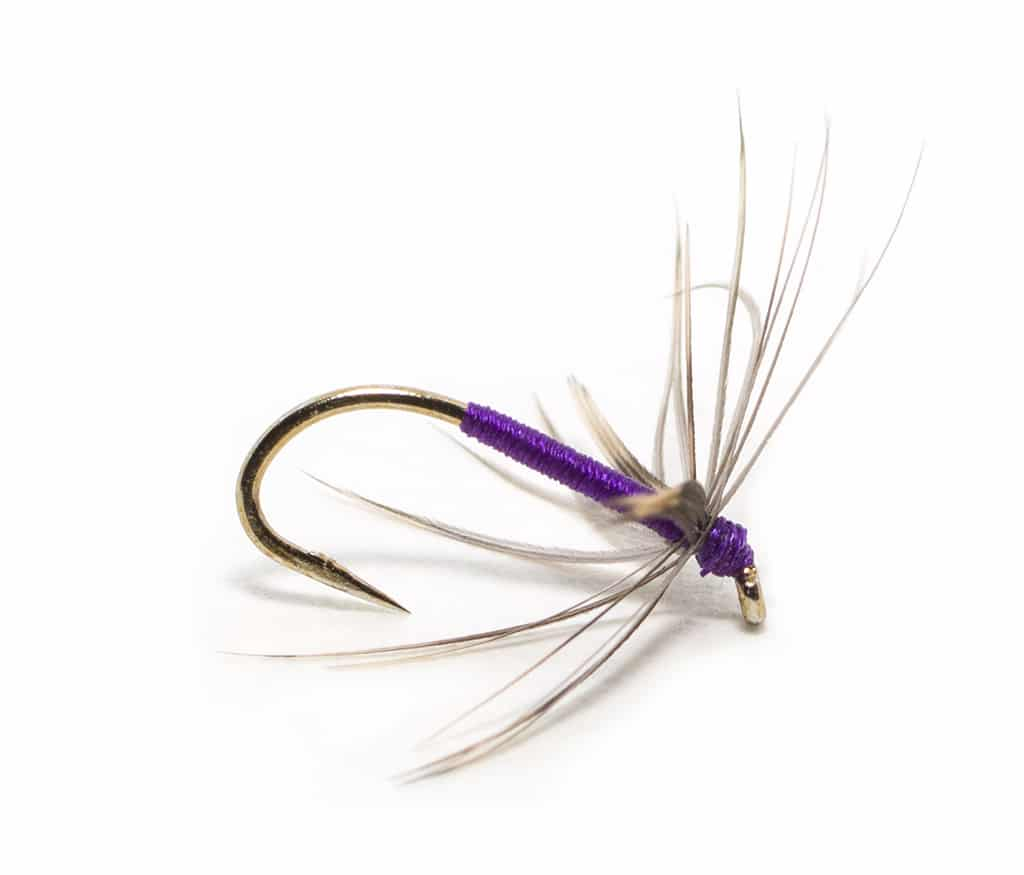 snipe and purple north country spider