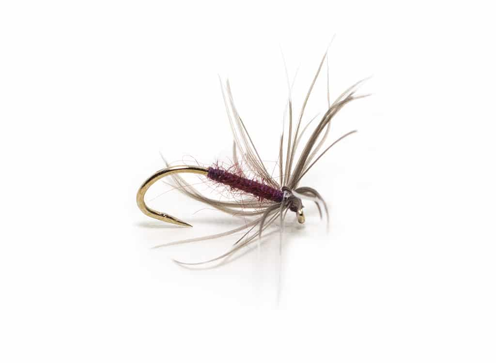 Jim Wynn's dressing of the Snipe and Purple.