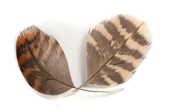 woodcock hackles for siders