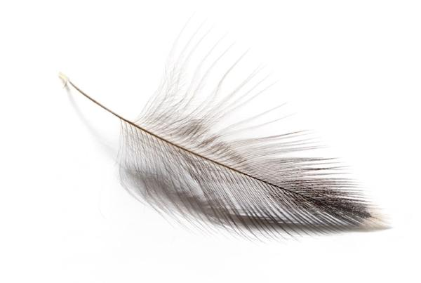 starling hackle