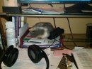 Terrible Office Assistant. Great Paper Weight.