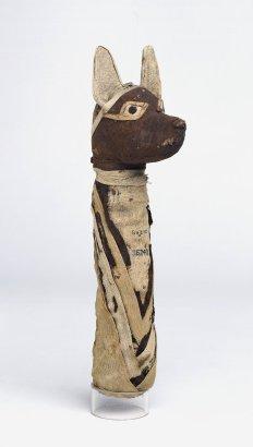 Mummy of a jackal