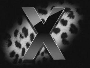 leopard_270x202.jpg