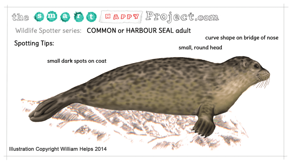 common seal identification illustration