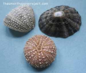 shells showing rotational or radial symmetry