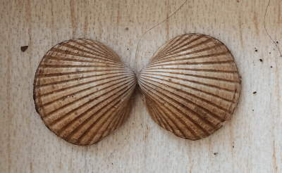 Bilateral symmetry in nature