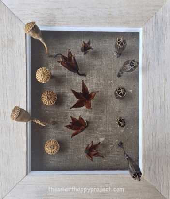 shapes in autumn seed heads