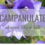 Nature Words – Campanulate