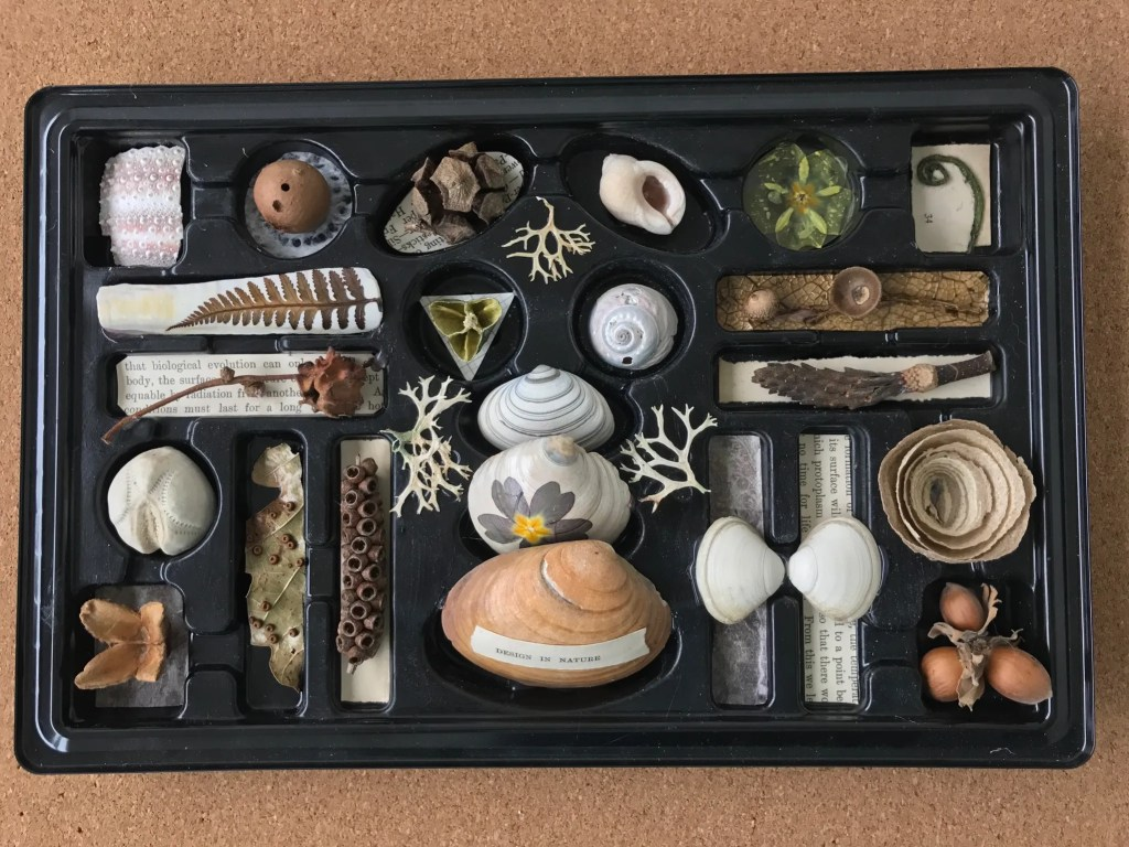 natural collection in a chocolate box display