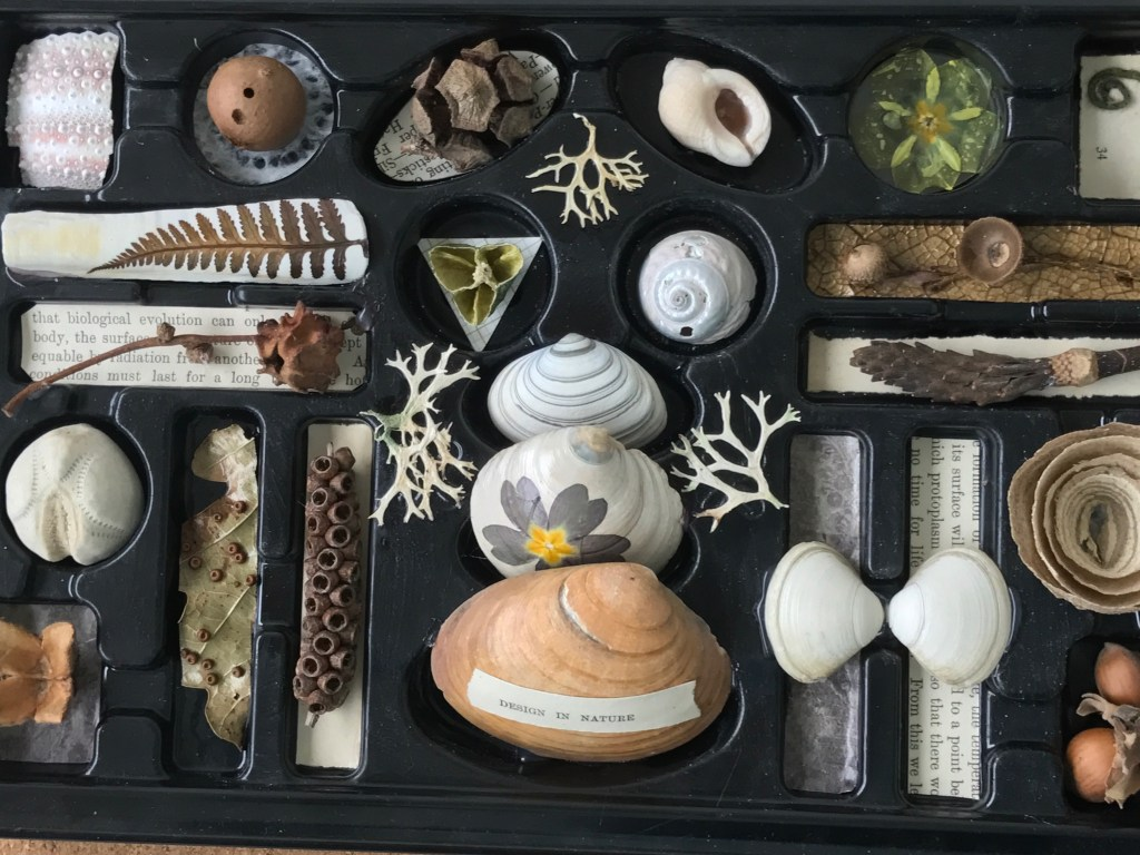 Natural Collections in a chocolate box