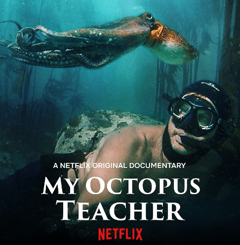 My Octopus Teacher