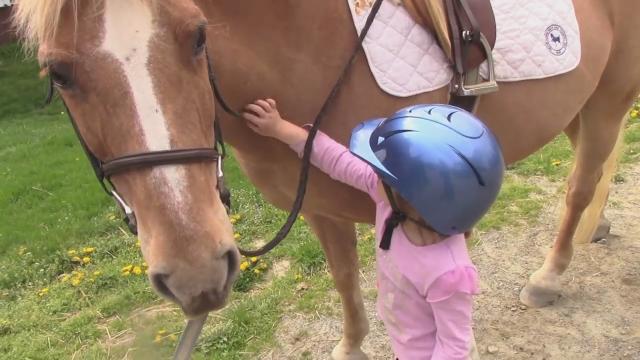 Pony Rides Near Me