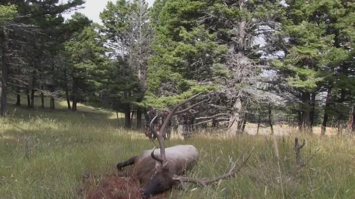 Archery Elk Hunting