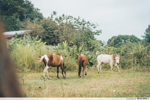 Anna Farm & Eatery - buffalo animal farm