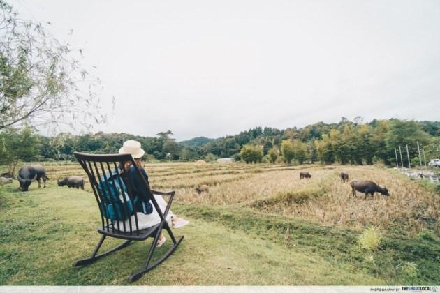 Anna Farm & Eatery - buffalo watching
