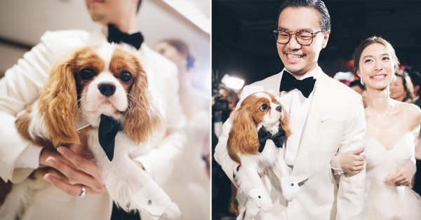 Thai Couple Has Pet Dog As Witness At Their Wedding, Even Wears His Very Own Tuxedo