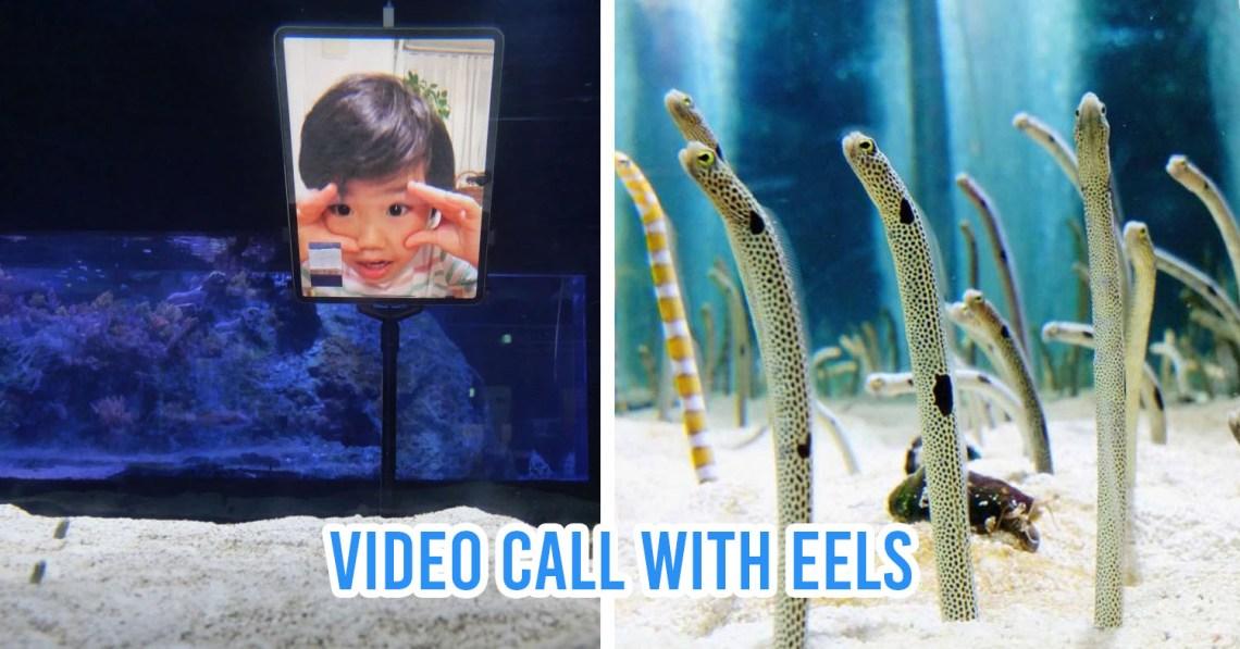 eels sumida aquarium