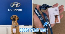 Abandoned Doggo In Brazil Gets Hired To Work As Receptionist At Hyundai Car Dealer