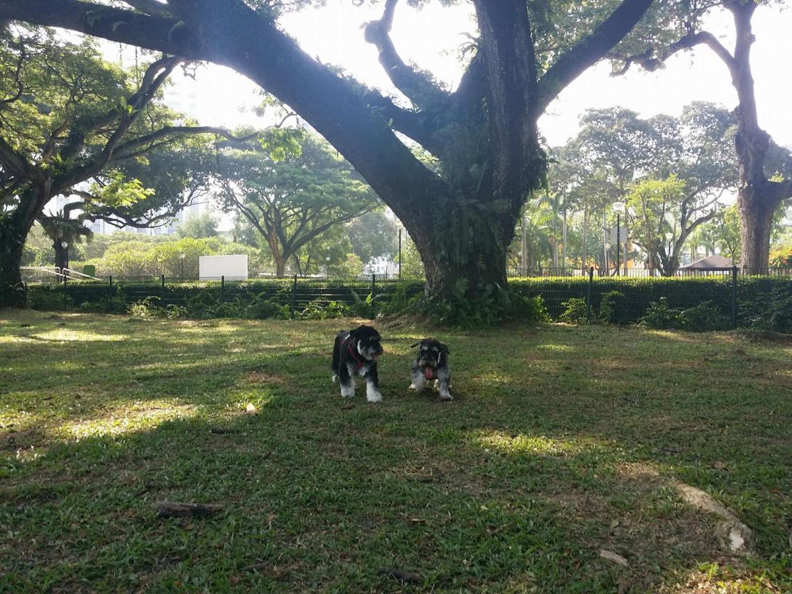 Dog runs Singapore - katong park dog run
