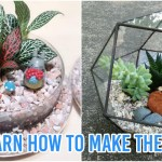8 Terrarium Workshops In Singapore For You To Diy Your Own Low Maintenance Mini Gardens