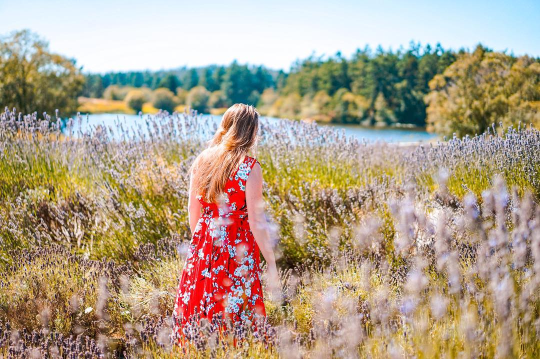 Seattle travel guide SIA - pelinda lavendar fields