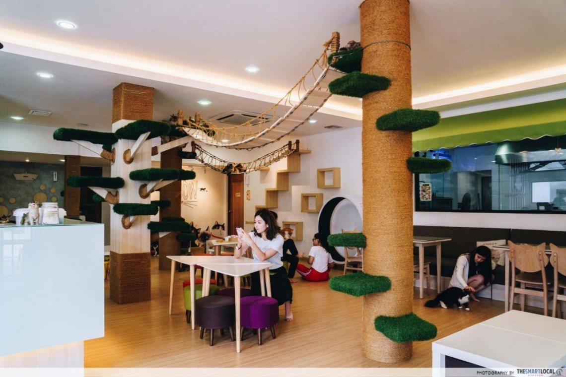 JB Cafes - CATS Cafe