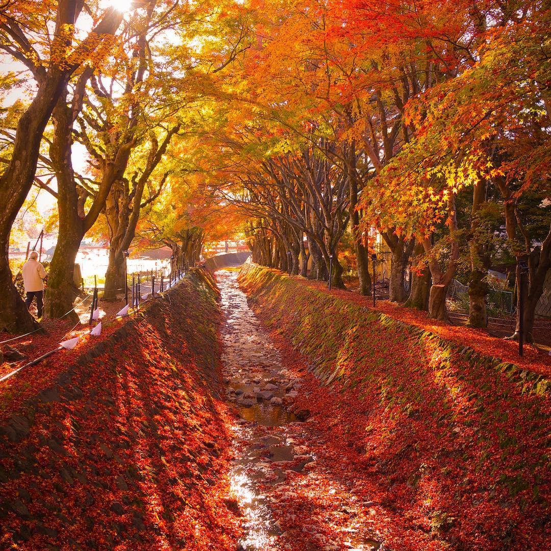 Autumn Japan 2019 yamanashi