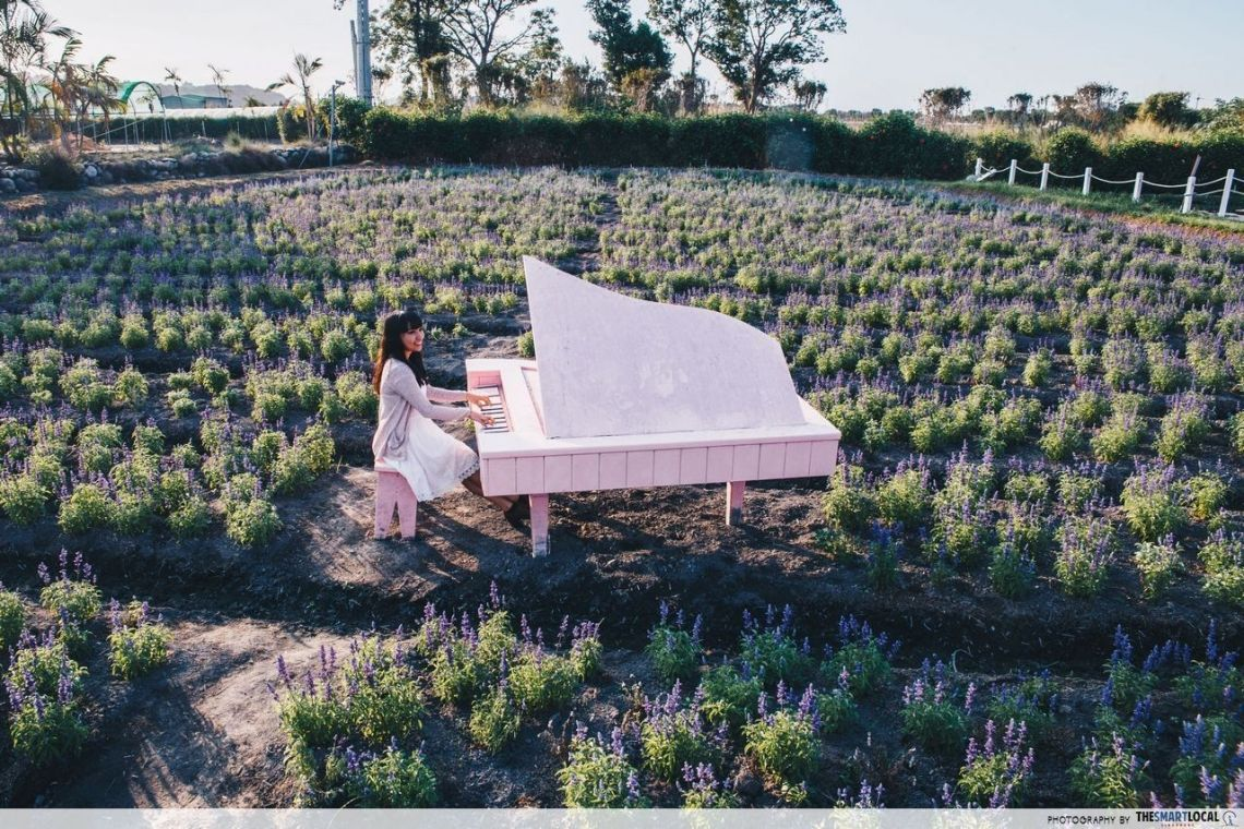 mispronounced english words - lavender field in taichung