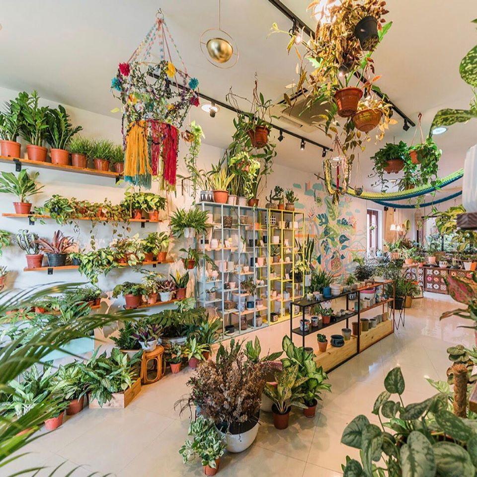 Tumbleweed Plants interior