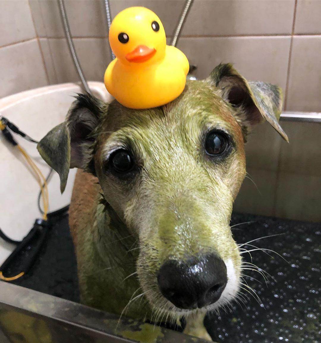 Pet grooming in Singapore - Sonic Pet Grooming