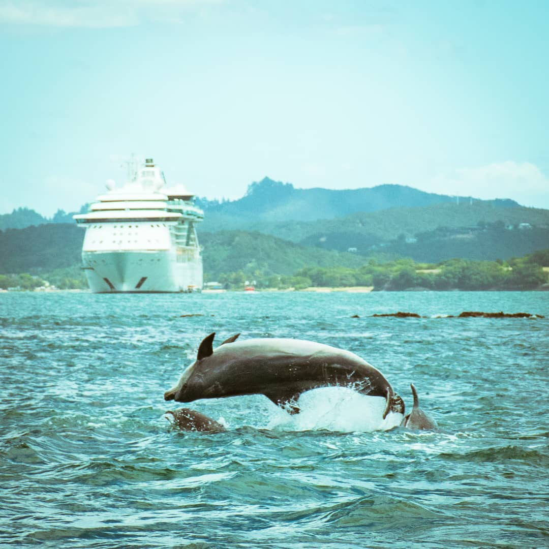 New Zealand self-drive dolphin