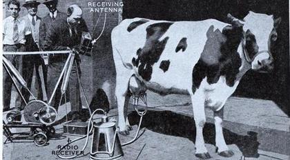 radio vaca