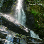 Laurel Falls Hiking Trail