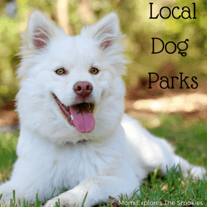 Knoxville and Smoky Mountain Dog Parks