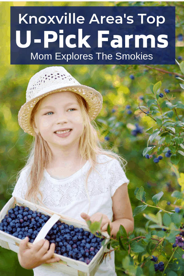 Best U-Pick Farms to Pick Strawberries, Blueberries, and More Near Knoxville, TN, Mom Explores The Smokies