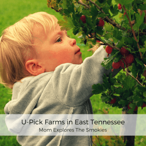 pick your own farms in Knoxville Maryville and the Smoky Mountains