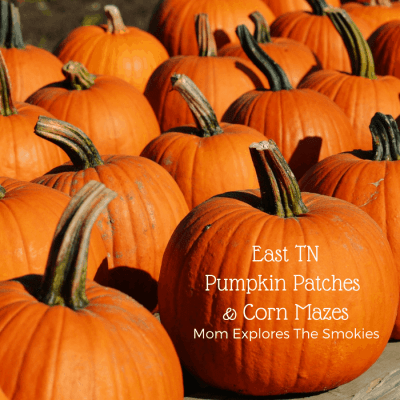 Pumpkin Patches and Corn Mazes in East Tennessee, Knoxville and The Smoky Mountains