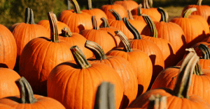 East Tennessee Pumpkin Patches & Corn Mazes, Mom Explores The Smokies