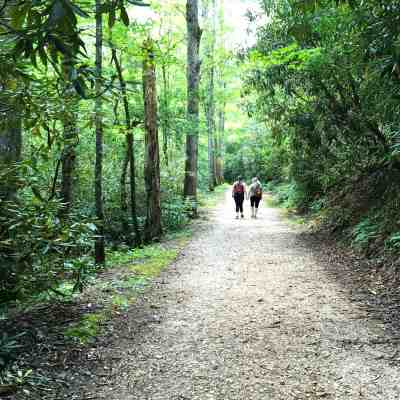 Little Brier Gap Trail to the Walker Sisters' Cabin