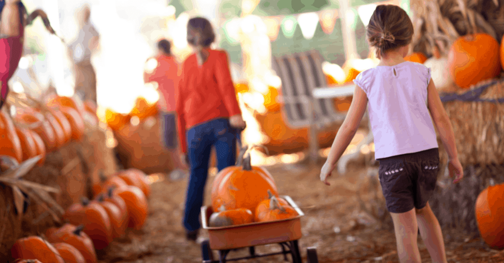 Best Corn Mazes and Pumpkin Patches Knoxville TN