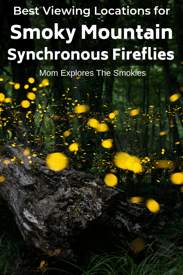 Synchronous Fireflies: Best Smoky Mountain Viewing Spots