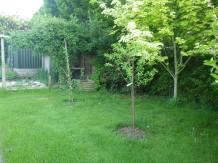 More fruit trees at the back of the house