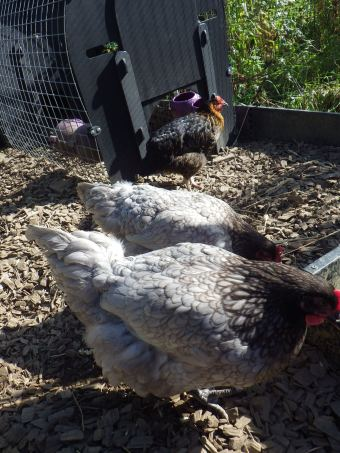 Bluebell girls sticking together