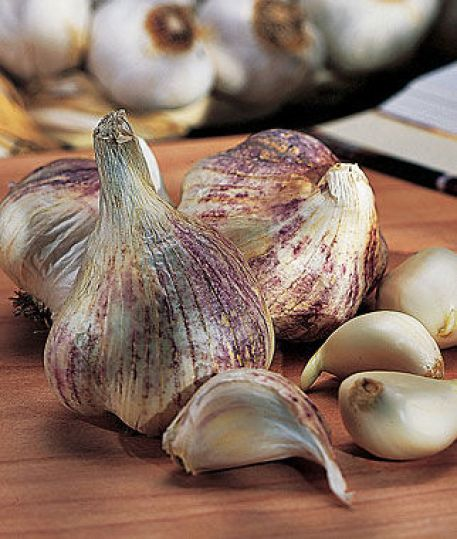 Early Italian Softneck Garlic from Burbee. Click here to purchase
