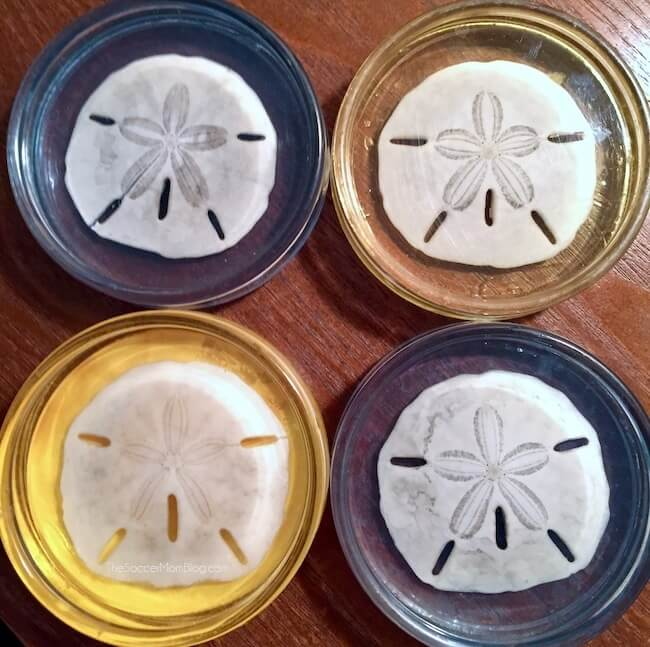 blue and gold resin coasters filled with sand dollars