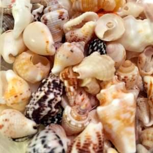 DIY Coral and Sell Resin Bangles