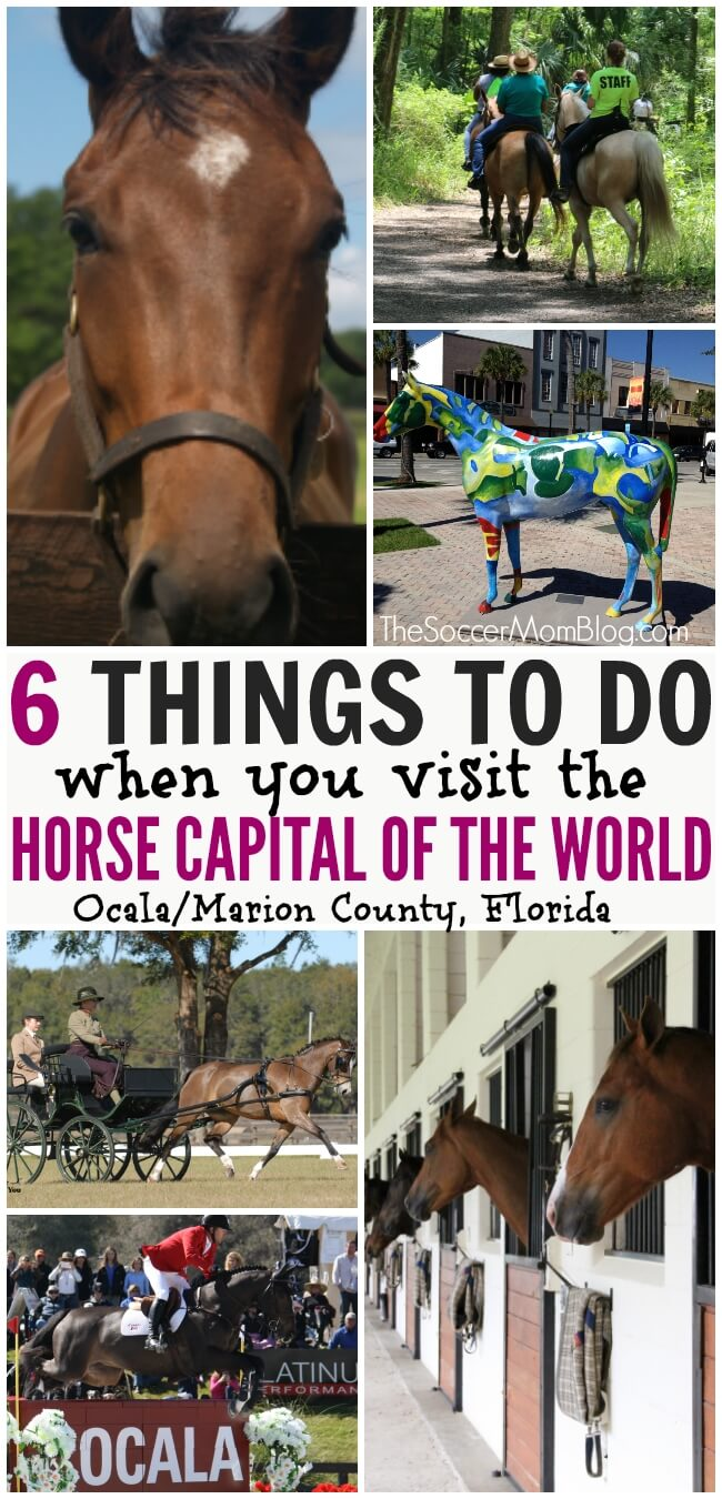 Why you should visit the Horse Capital of the World -- activities including stable tours, racing, riding lessons, camps, trail rides, and more!